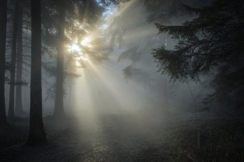 light in a dark forest