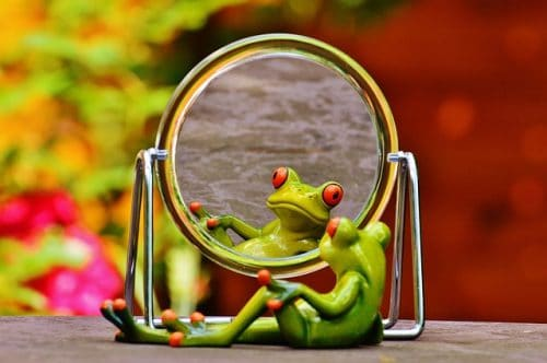 frog looking in a mirror