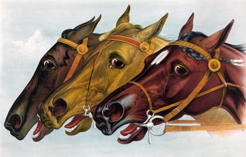 3 race horses illustration