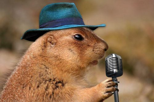 squirrel with a blue hat holds a microphone