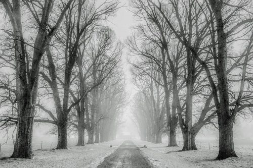 A road in the middle of trees in winter